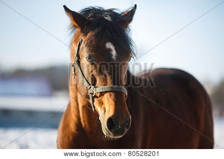 Head Of The Horse