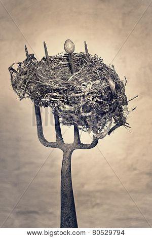 Still life of Birds nest and birds egg skewered on an old rusty garden forkBirds Nest