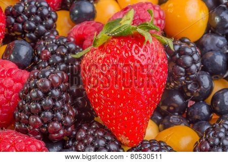 Strawberry With Mixed Berries