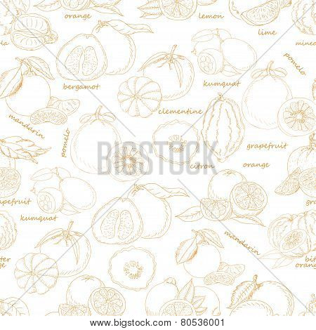 Seamless Pattern With Citrus Fruit On White Background