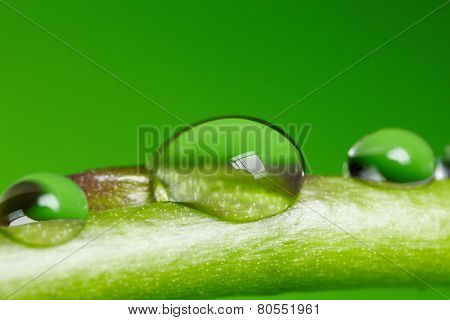 Water droplet on the leaf. Clear and pure nature background