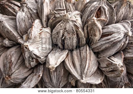 Gray dried plant capsules