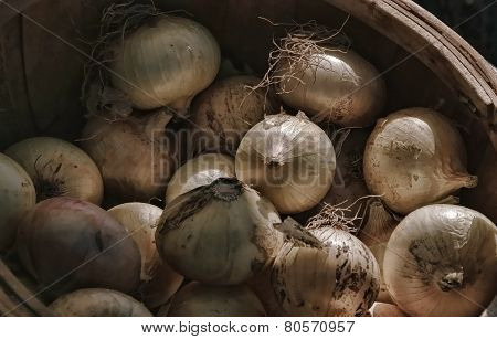 Little brown onions