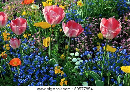 Pink Tulips And Multicolored Garden Flowers