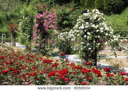 A Formal Rose Garden