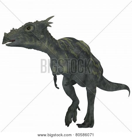 Dracorex Dinosaur Over White