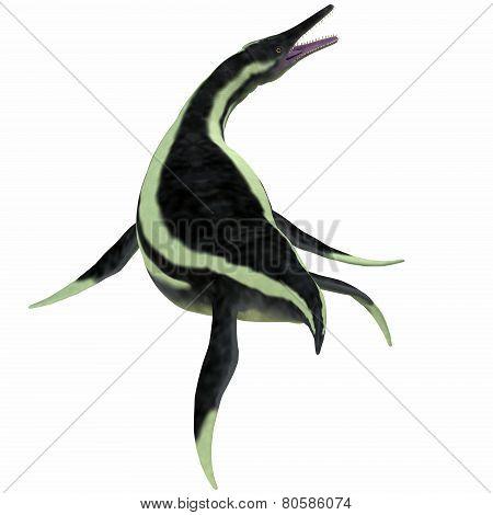 Dolichorhynchops Plesiosaur Over White