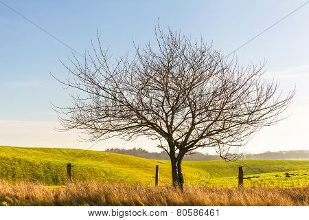 Single Tree at Field Border