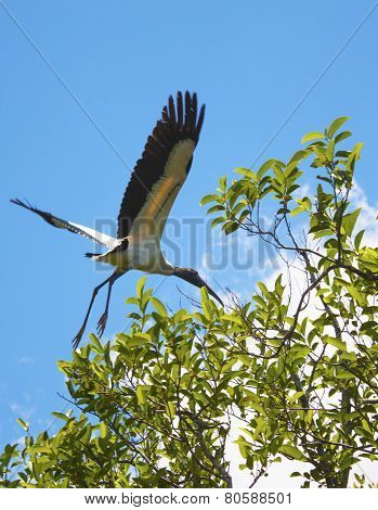 Heron Flying In The Everglades National Park, Florida