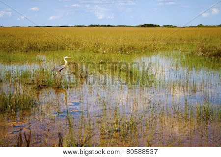Heron In The Everglades Park In Florida