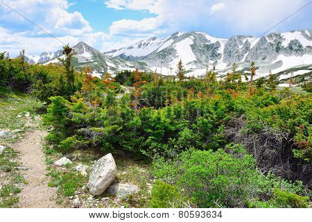 Trail In Snowy Range Mountains Of  Medicine Bow, Wyoming In Summer