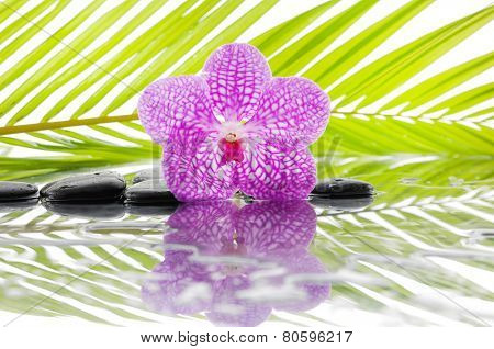 Macro of pink orchid and wet black stones with green leaf