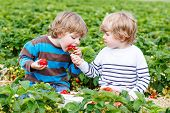 stock photo of little kids  - Two little friends having fun on strawberry farm in summer - JPG
