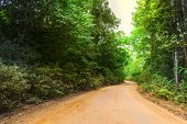 pic of long winding road  - Road in forest - JPG