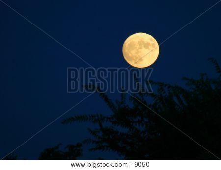 Moon Over California