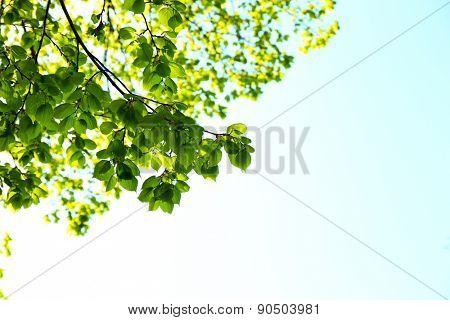 Beautiful green twigs on blue sky background