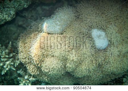 Underwater landscape of soft corals carpet
