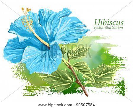 Blue Flower Hibiscus on green background - vector illustration / Eps10
