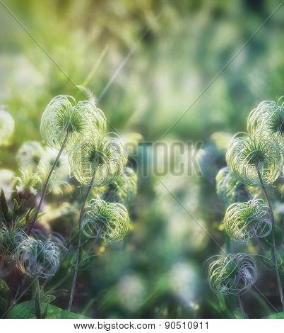 Beautiful softness flower - closeup