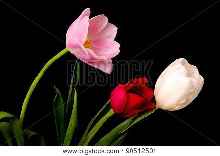 Tulip Floral Arrangement