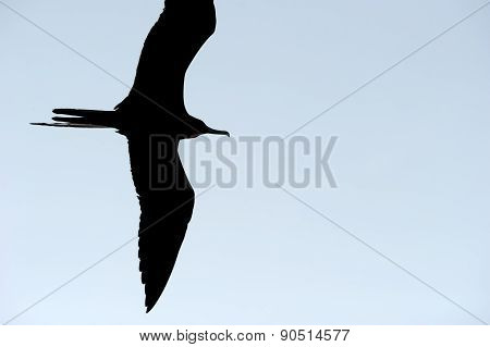 Bird Flying Silhouette Isolated Closeup
