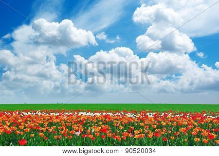 Panorama of spring meadow. Nature composition.