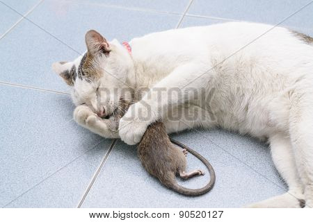 Cat Catch And Bite Mouse, Rat