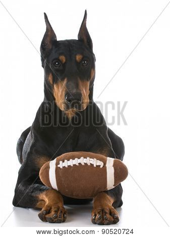 doberman pinscher with a toy ball on white background