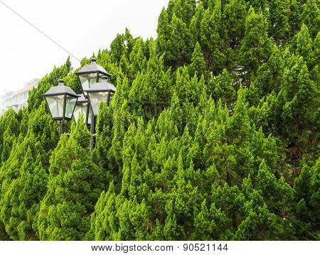 Street Lamp In A Bush