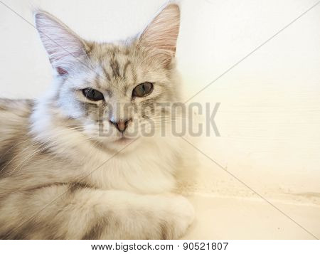 Cat Sitting On The Floor