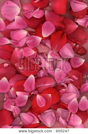 Pink And Red Rose Petals