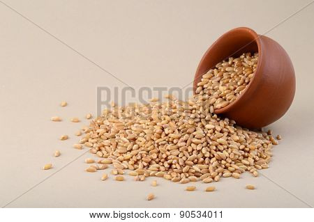 Wheat grains in clay pot