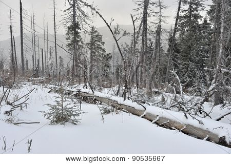 Foggy Winter Landscape With Fallen Tree .