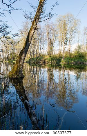 Scenic Reflections Of Trees And Clouds In Water