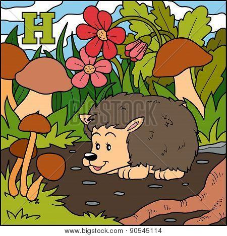 Color Alphabet For Children: Letter H (hedgehog)
