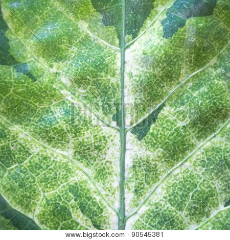 Close Up Natural Green Leaf Background Texture