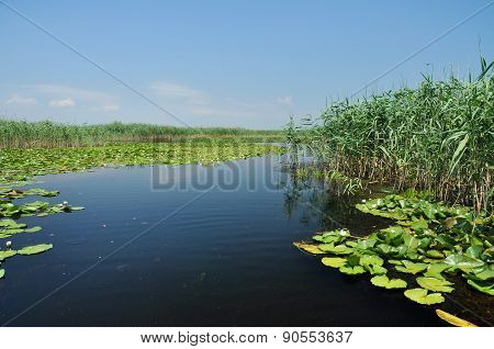 Water Channel In The Danube Delta With Swamp Vegetation