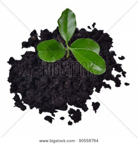 Small Sprout Growing In The Soil On A White
