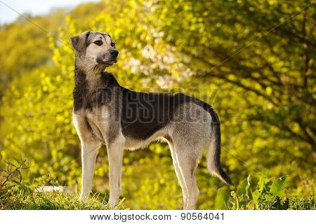 Black and White Dog on Grass