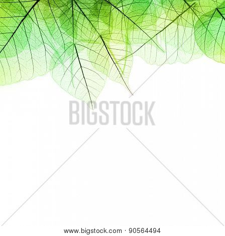 Border of Green  Leaves - isolated on white background