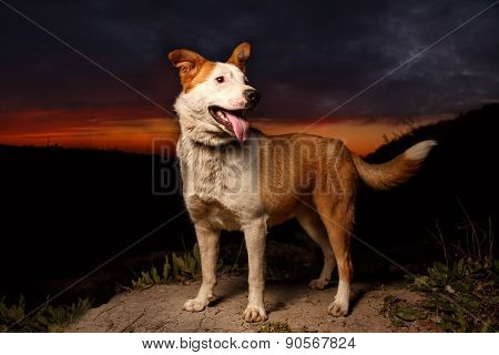 Funny Mixed Breed Ginger Dog