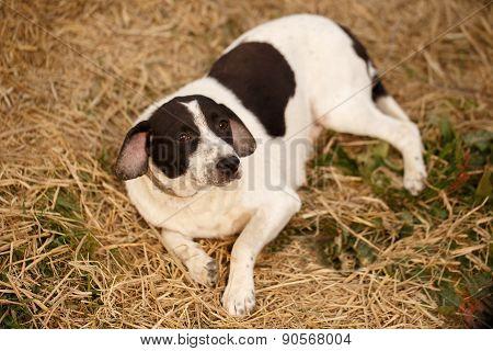 Black and White Dog Lies on Manger