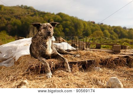 Mixed Breed Dog Lies Outdoor on Mountain
