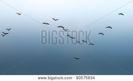 Birds Flying In Blue Sky