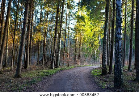 Footpath In Spring Forest