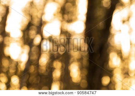 Natural Forest Blurred Background