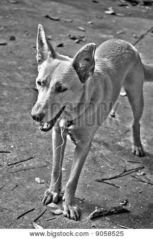 Mixed Breed Dog HDR