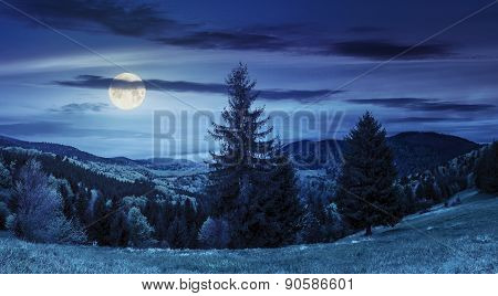 Coniferous Forest  In Mountain At Night