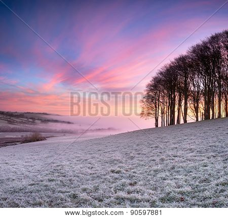 Sunrise Over Beech Trees