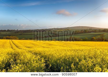 Spring Fields At Callington In Cornwall